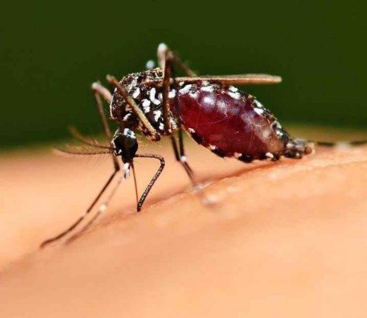 La Malaria o paludismo