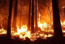 Como prevenir los incendios Forestales