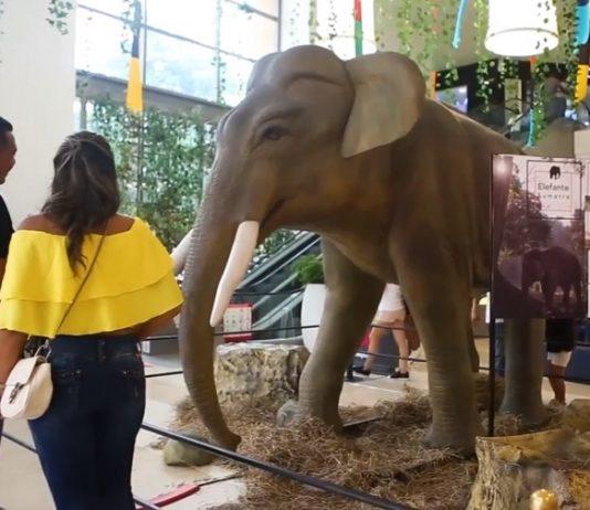 Mallplaza Cartagena exhibicion animales en peligro de extinción