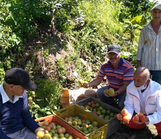 Adultos-mayores-colombianos-productivos